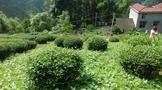 民族智慧之结晶●!承载千年的中华茶文化系统大盘点