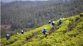 农业农村部答复:关于茶产业科技创新与绿色发展相关问题建议