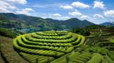 为何修订《福建省促进茶产业发展条例》?背后的原因令人振奋!