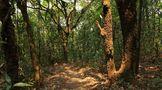 岁月知味易武名山之茶王树——茶王图腾的破势之路