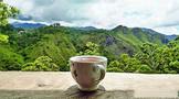 需求回升,印度茶叶市场预计第二季度好转