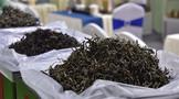 关于第2届东莞国际茶产业博览会延期举办的通知
