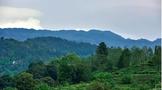 第三次全国国土调查主要数据公报:全国茶园面积2527.05万亩