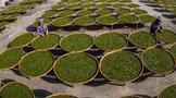 十四五专题解读-茶文化发展