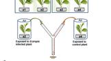 茶叶科研进展 ,茶树害虫取食后的防御机制方面取得新进展