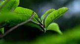 安溪县召开茶业发展务虚研讨会,全力推动茶产业高质量发展