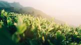 走进中国茶,散茶和包装茶如何选购,春茶、夏茶、秋茶有何不同?