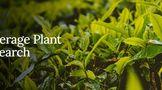 Bev Plant Res,茶树叶片儿茶素类物质积累的昼夜节律性变化 安徽农业大学研究新进展