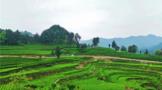 湘西州推动茶叶产业高质量发展结硕果