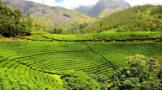 南阳大宗农产品加快茶产业高质量发展