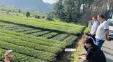 遵义||贵州省农业农村厅到凤冈县检查茶叶有机肥替代化肥试点县项目