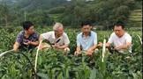 程良斌:种茶如何选择土壤