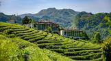 茶叶国际贸易的顶级会议——中国茶叶进出口贸易年会缘何落户黔南州?