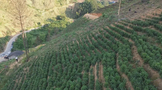 推动六堡茶产业销全国 卖全球