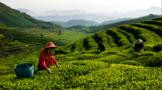 新征程 新发展:仕阳镇做精做优万排茶旅产业园
