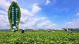 横州市:推进茉莉花一二三产业融合发展
