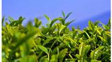 发挥科技支撑和引领作用 推动精制川茶产业提档升级