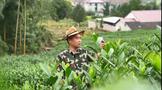 """长兴和平退伍老兵靠种茶吸粉200多万 带着村民做""""网红"""""""