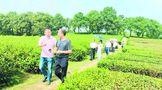 岳阳专家和旅行社深入茶旅精品线路考察调研 推动茶旅融合发展