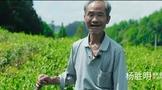 """""""农文旅""""大融合的酉阳样本:以茶为媒焕新产业"""