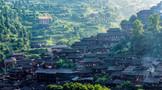 八马茶业以茶助农 助力贵州茶产业发展