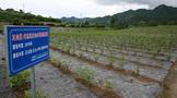 湖北茶之变:巴东绿葱坡镇中村村茶产业发展记