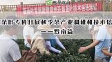 黔南茶叶专班开展秋季茶产业调研和技术培训