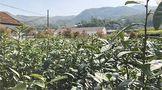 茶产业相关机械或将迎来更大发展机遇
