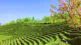 陕西十佳茶旅融合示范线:汉祥茶业观光园