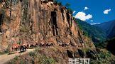 发现滇藏新茶路(上)