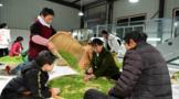 陕西十佳茶产业农民专业合作社:山阳县红枫茶业专业合作社