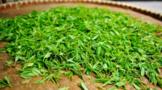舌尖上的中国茶叶:花果山云雾茶