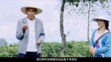 凤庆县峡山茶叶专业合作社:共打有机牌同走生态路