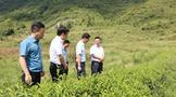 陈康赴江口调研生态茶产业发展情况