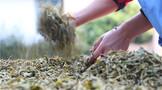 茶葉市場,已經沒有人希望茶葉漲價了