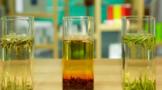 福鼎白茶知识集锦:你知道白茶的2、3、4、6吗?