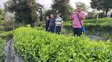 普洱思茅:不遺余力克服困難 如火如荼開展有機茶轉換工作