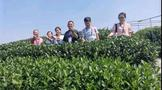 以茶為媒,浙川兩省共同探索鄉村振興共富之路!