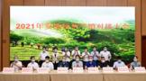 福建安溪:秋茶上市 產銷兩旺