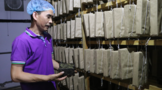 陕西十佳制茶工匠:岳公开--陕西汇源健康食品有限公司