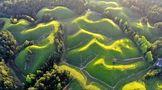 湖北西南有個茶葉縣,七成農戶種茶