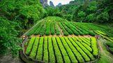 好茶、好景、還有美食!十月的武夷山太贊了
