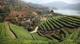 東溪鄉:茶旅融合強村富民