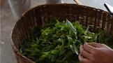 西双版纳:基诺山中出好茶