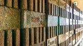 """2021""""一带一路""""赤壁青砖茶产业发展大会将于11月举行"""