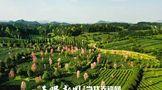 凤冈:茶叶出口连续两年领跑全省,茶文旅融合向更高水平发展