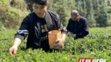 龚意诚:茶产业邂逅现代表达 新思路再振茶经济