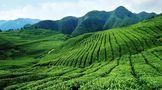 凤冈:文康旅农林茶多业态融合 成就全域森林康养小城