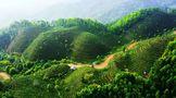 苍梧县六堡茶船古道田园综合体被列为自治区试点项目