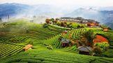 第十七届中国茶业经济年会怎么开?亮点解析来了●!